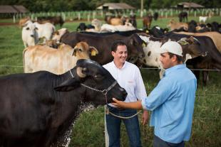 Livestock producers and veterinarian on a dairy farm in Brazil.